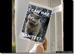 cat sanity